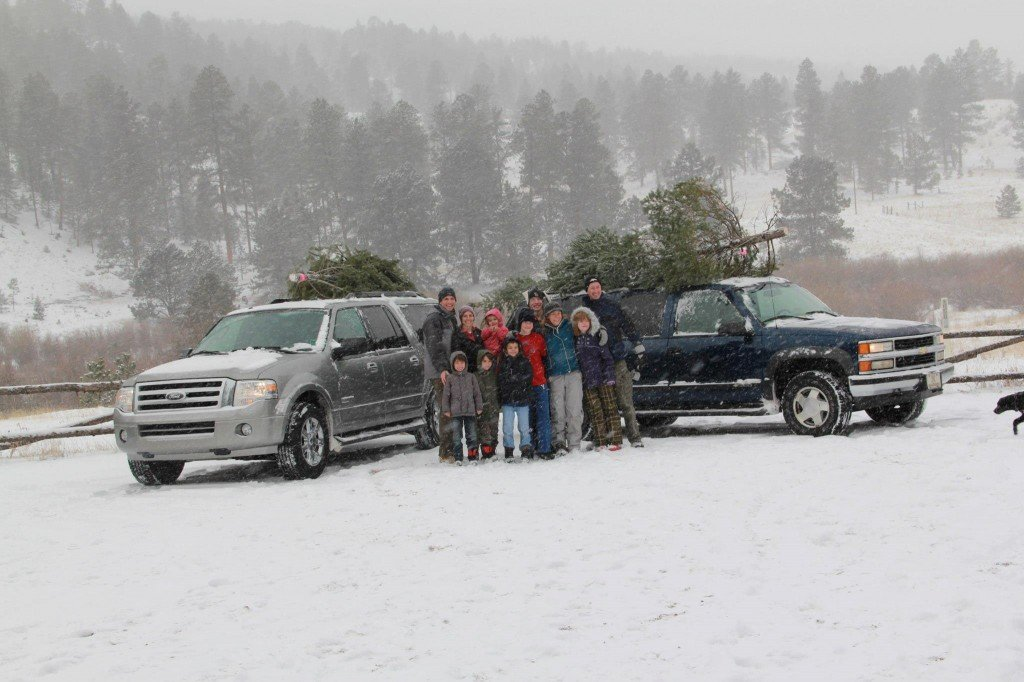 Christmas tree permits cutting colorado - woodland park