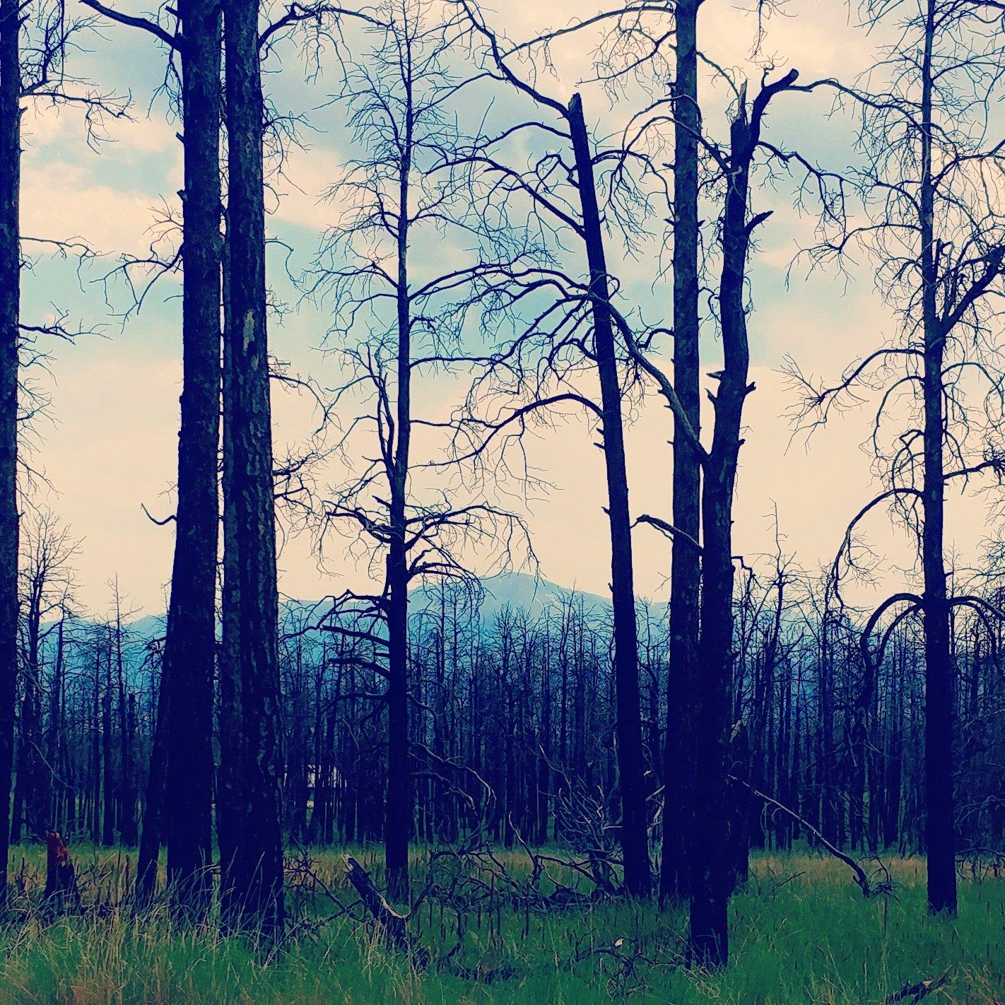 black forest burn scar