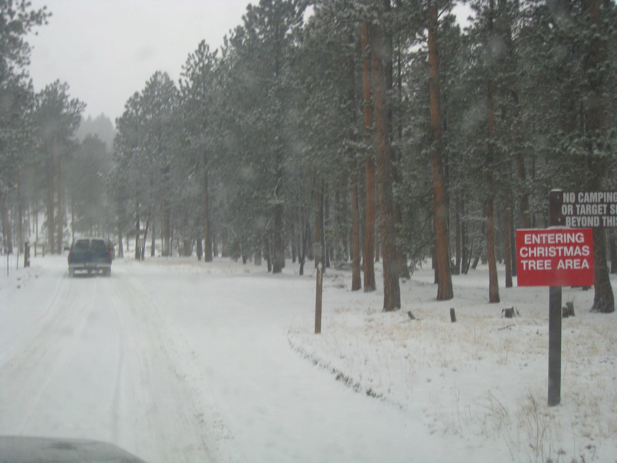 christmas tree cutting permit colorado Springs 2012