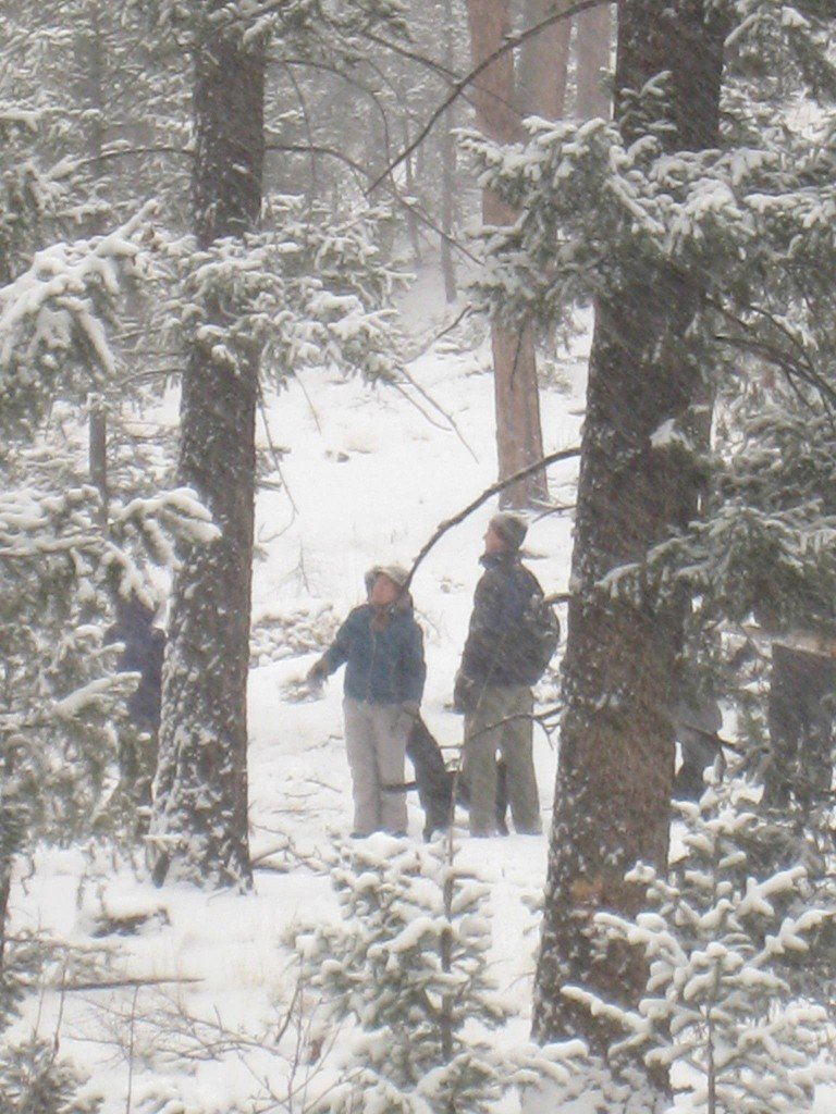 Christmas cutting permits colorado Springs 2012