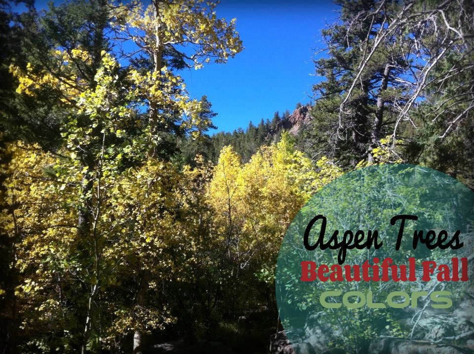 Fall Colors Colorado scenic byways