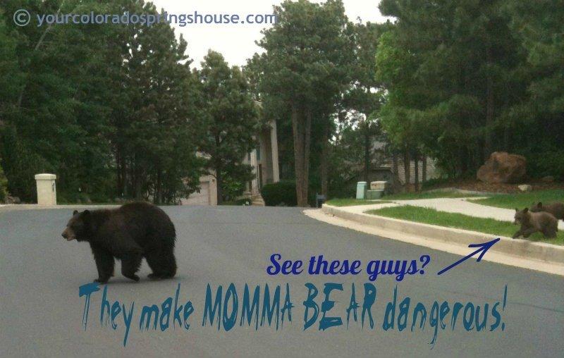 bears in colorado Springs