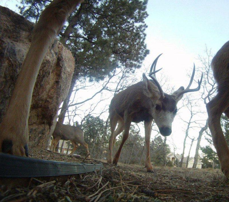 wildlife in Colorado Springs