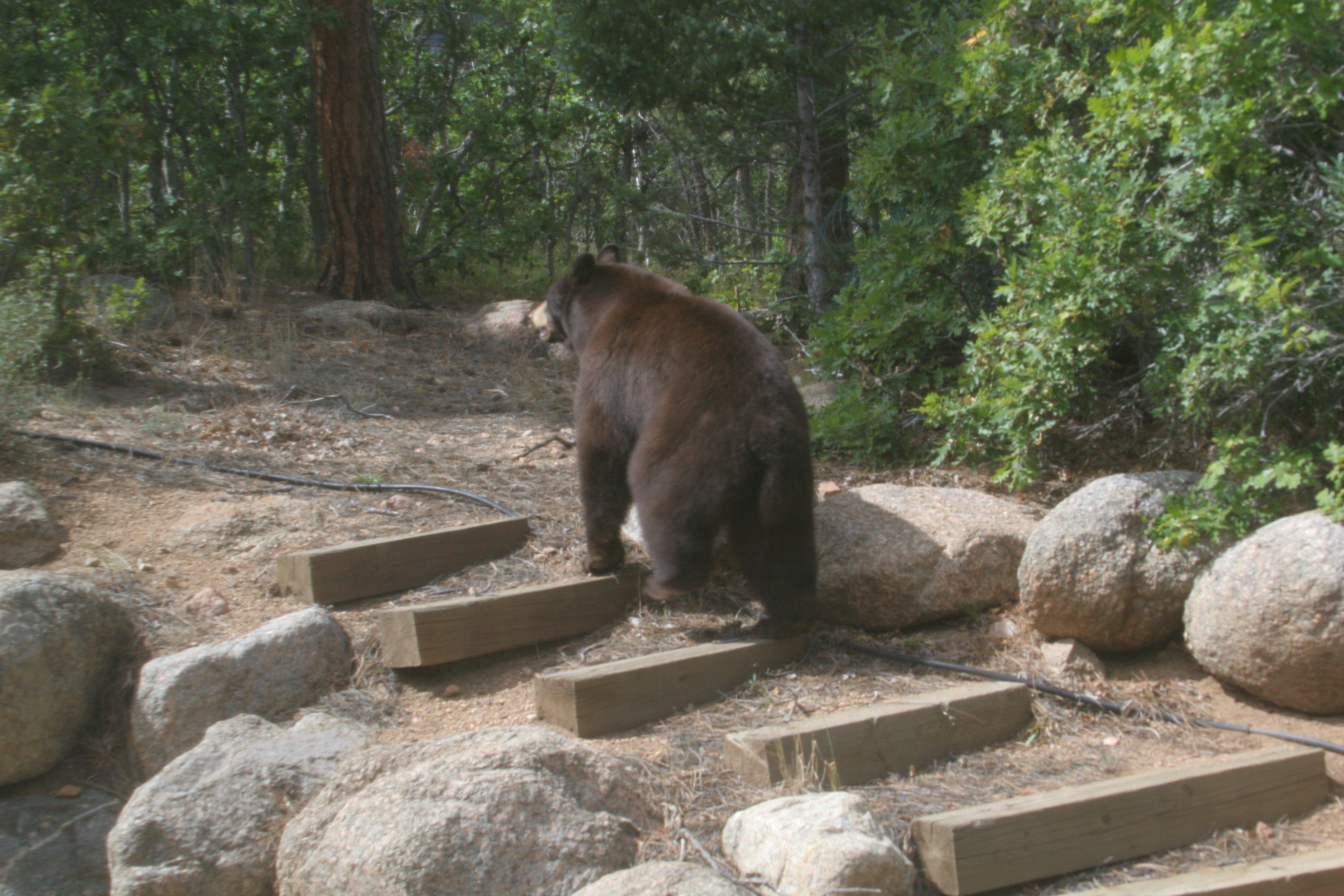 Bears Fox Deer Coyote Mountain Lion Wildlife Oh My