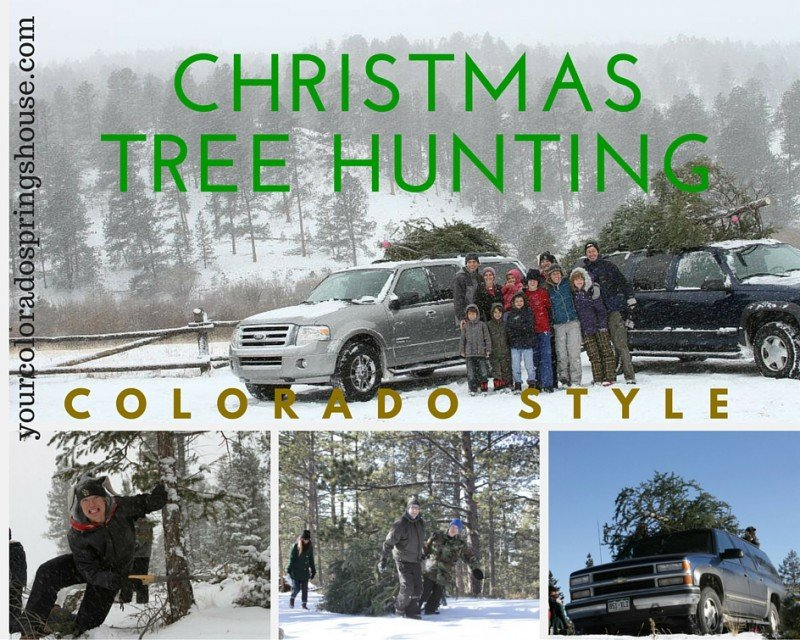 Christmas Tree Hunting in the pikes peak region