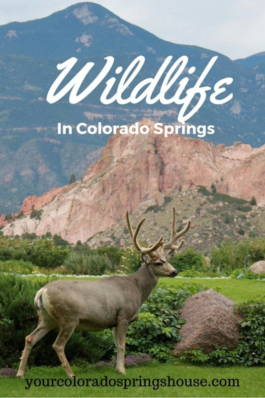 s relocation guide Wildlife