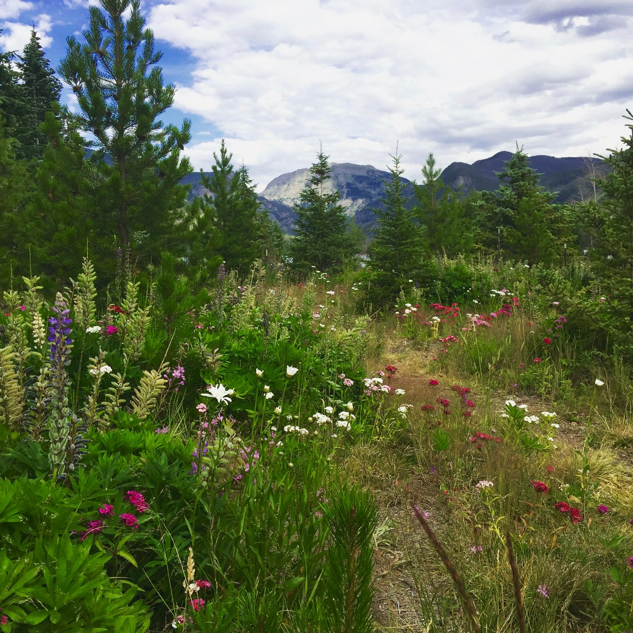 Picture of mountain flowers at Grand Lake