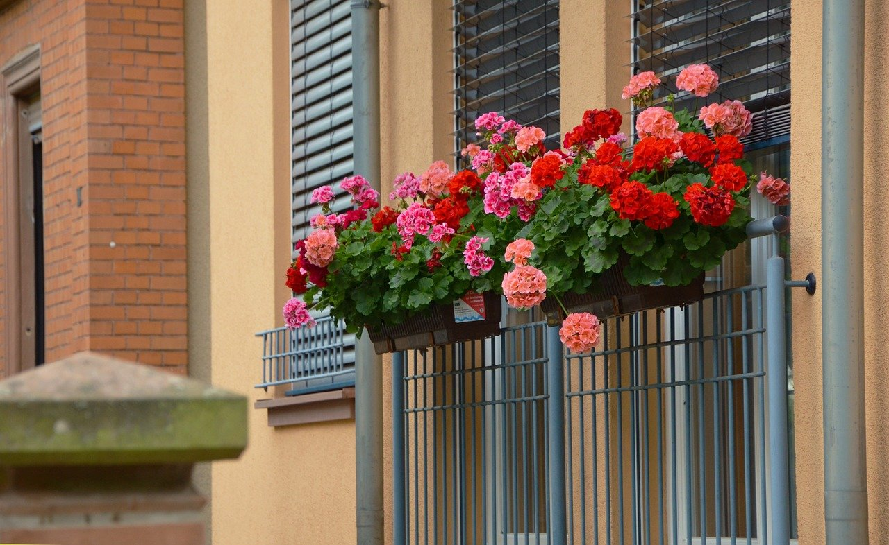 flowers in planter outside windows with shades