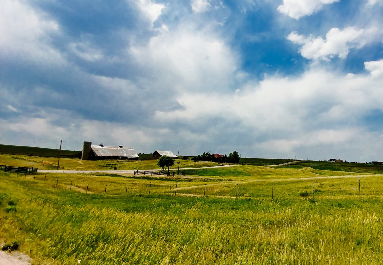 Picture of grasslands in Black Forest, Colorado Springs