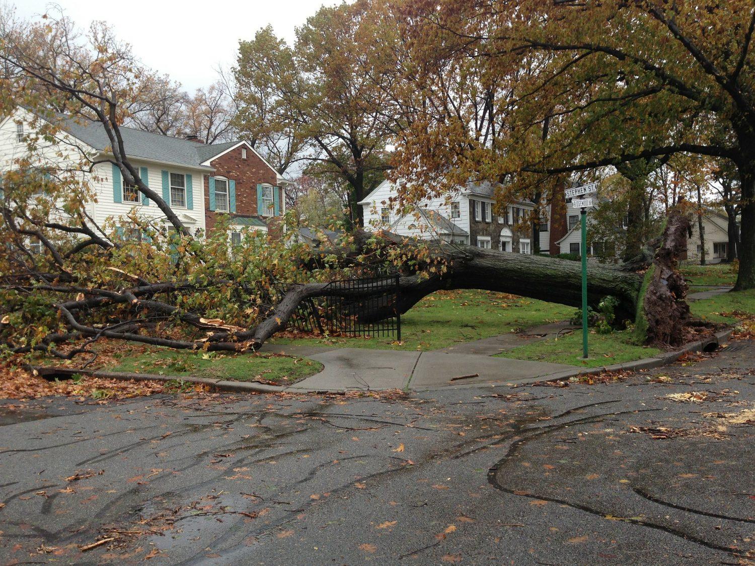 picture of large tree uprooted in front of houses