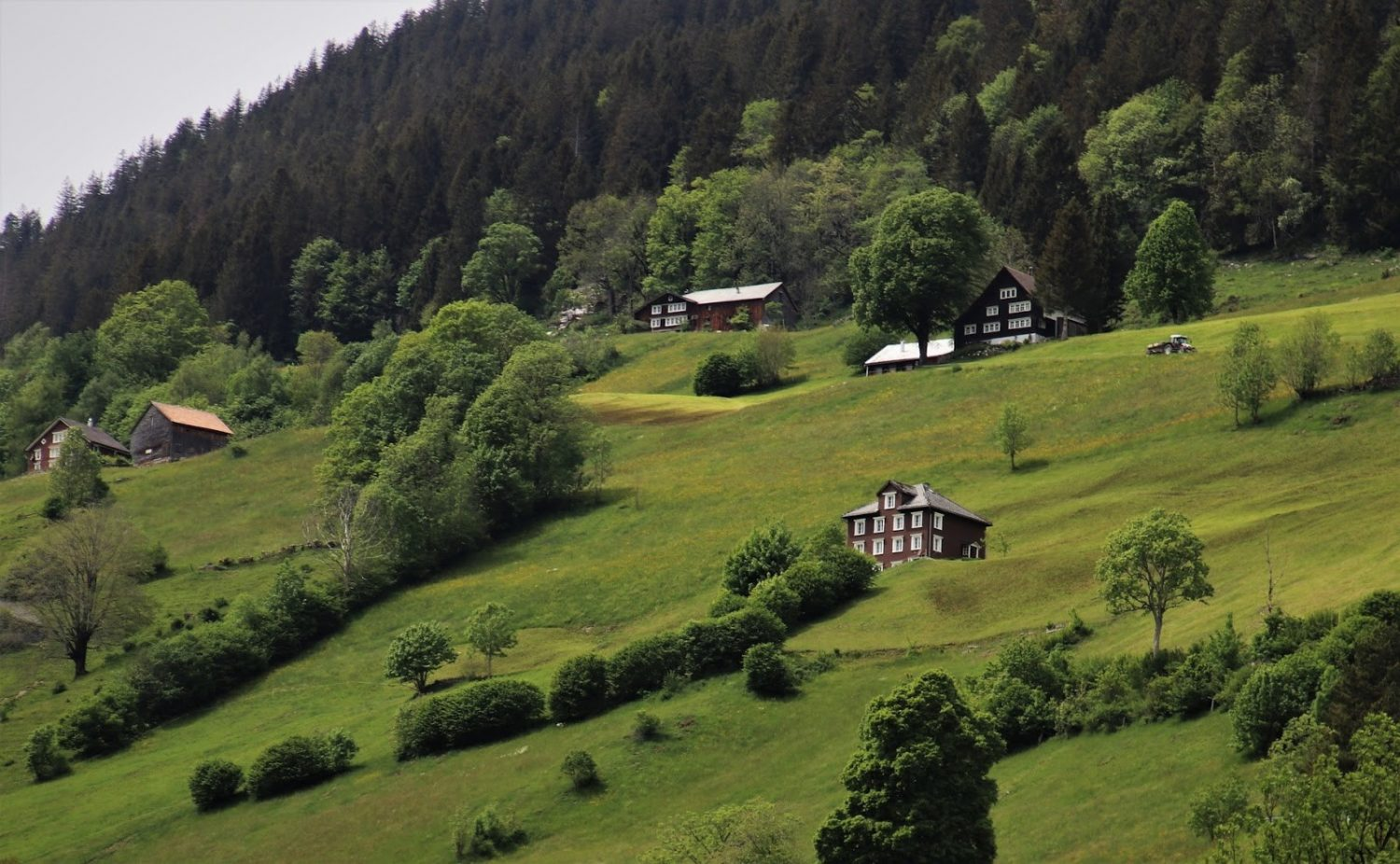 picture of houses on hill with trees